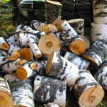 Арбористика. Спил деревьев профессионально, Новосибирск