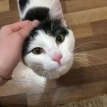 """Вчера найден котик в Калининском р_н,около магазина """"Колорлон"""", Новосибирск"""