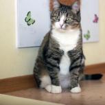 Молодая полосатая кошечка Шарлиз. Стерилизована, Новосибирск