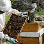 курсы пчеловодства, Новосибирск