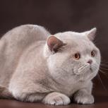 Кот приглашает на вязку, Новосибирск