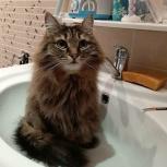 Отдам 2 кошек в хорошие руки, Новосибирск