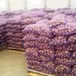 Картофель продовольственный...оптом...новый урожай....хотите стать мил, Новосибирск