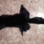 Продам боа черное, Новосибирск