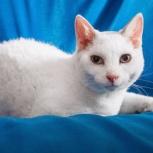 Котик Малой ищет хозяев, Новосибирск