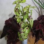продам различные комнатные растения, Новосибирск