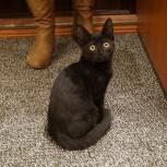 Найден котенок около дома Кирова, 232, Новосибирск