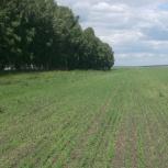 Предлагаем помощь в подборе земельных участков Алтайский край., Новосибирск