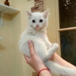 Отдам котят в хорошие руки даром, Новосибирск