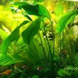 продам аквариумные растения, Новосибирск