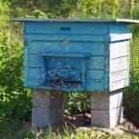 Куплю ульи и пчёл, а так-же др. инвентарь, Новосибирск