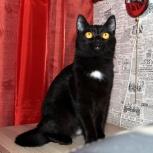 Элегантная молодая кошечка Эля, Новосибирск