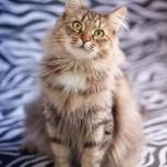 Кошка в добрые руки, Новосибирск