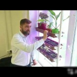 Фито-ферма для выращивания зелени, цветов, Новосибирск