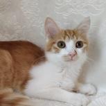 Красивый котенок Нюша, Новосибирск