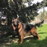 Собака - верный друг человека, Новосибирск