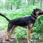 Ищем дом для принца Артура! собака, Новосибирск