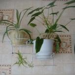 Продам черенки комнатных растений, Новосибирск