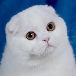 Красивый котик ищет кошечку, Новосибирск