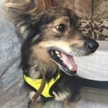 Нужна платная передержка для собаки 7000руб, Новосибирск