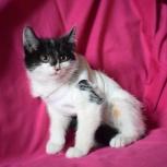 Котёнок Мила в добрые руки, Новосибирск