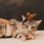 Кот котенок даром в чудесные руки, Новосибирск