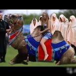 Катание на верблюде, Новосибирск