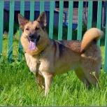 Умница и красавица собака Джулия!, Новосибирск
