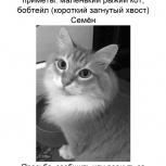 Потерялся кот в Бердске, Новосибирск