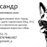 Кинолог/дрессировка собак, Новосибирск