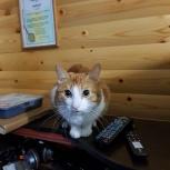 Ищу добрую семью(кот)      Всем. спасибо . Мальчик нашёл семью., Новосибирск