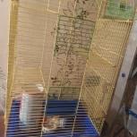 Большая клетка для крыс/белок и т.д., Новосибирск