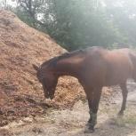 Конский перегной и конский навоз из конного клуба, Новосибирск