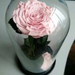 Нежно розовая Роза в колбе Premium, Новосибирск
