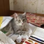 Котята, Новосибирск