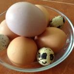 Домашние куриные яйца, Новосибирск