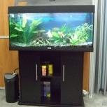 Продам аквариум Juwel RIO 180 (Германия), Новосибирск