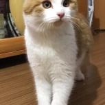Котенок мальчик 3 месяца, Новосибирск