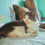 Юная красавица кошка Алиса, Новосибирск