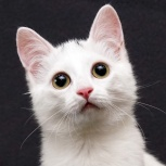 Ищем для особенного котенка Вани самых заботливых хозяев!, Новосибирск