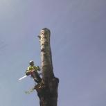 Спил, снос, удаление аварийных деревьев в городе и области, Новосибирск