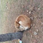 Потерялась собака срочно, Новосибирск