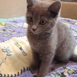 Срочный пристрой котёнка, Новосибирск