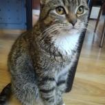 Отдам домашнюю красивую кошку с комплектом еды, Новосибирск
