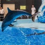 Вип билеты в дельфинарий, Новосибирск