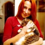 Домашняя передержка для кошки, кота, котенка, Новосибирск