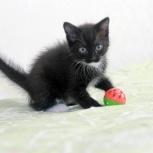 чёрно-белый котёнок мальчик, 1,5 мес, Новосибирск