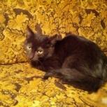 Чёрный котик 3,5 месяца, Новосибирск