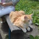 Отдам в хорошие руки рыжего кота, Новосибирск