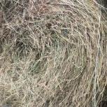Сено в рулонах 200кг Пшеница Ячмень ОБЬГЭС., Новосибирск